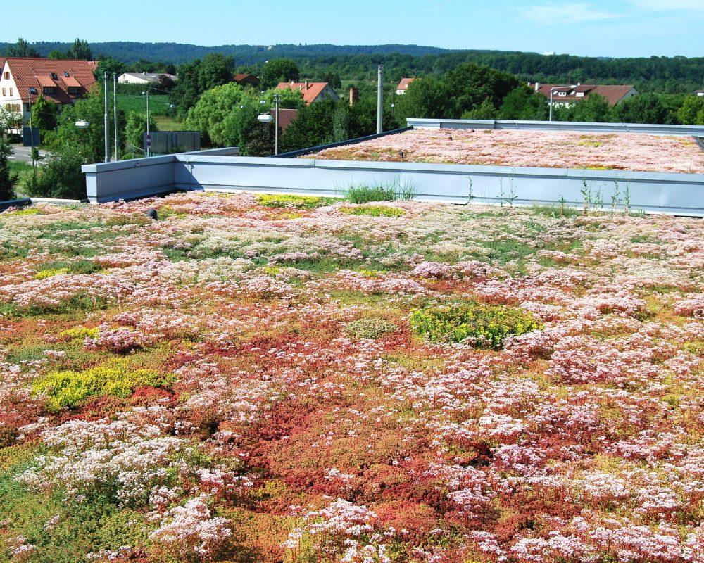 extensive Dachbegrünung, Foto: www.bauder.de